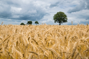 Készül Magyarország Digitális Élelmiszeripari Stratégiája